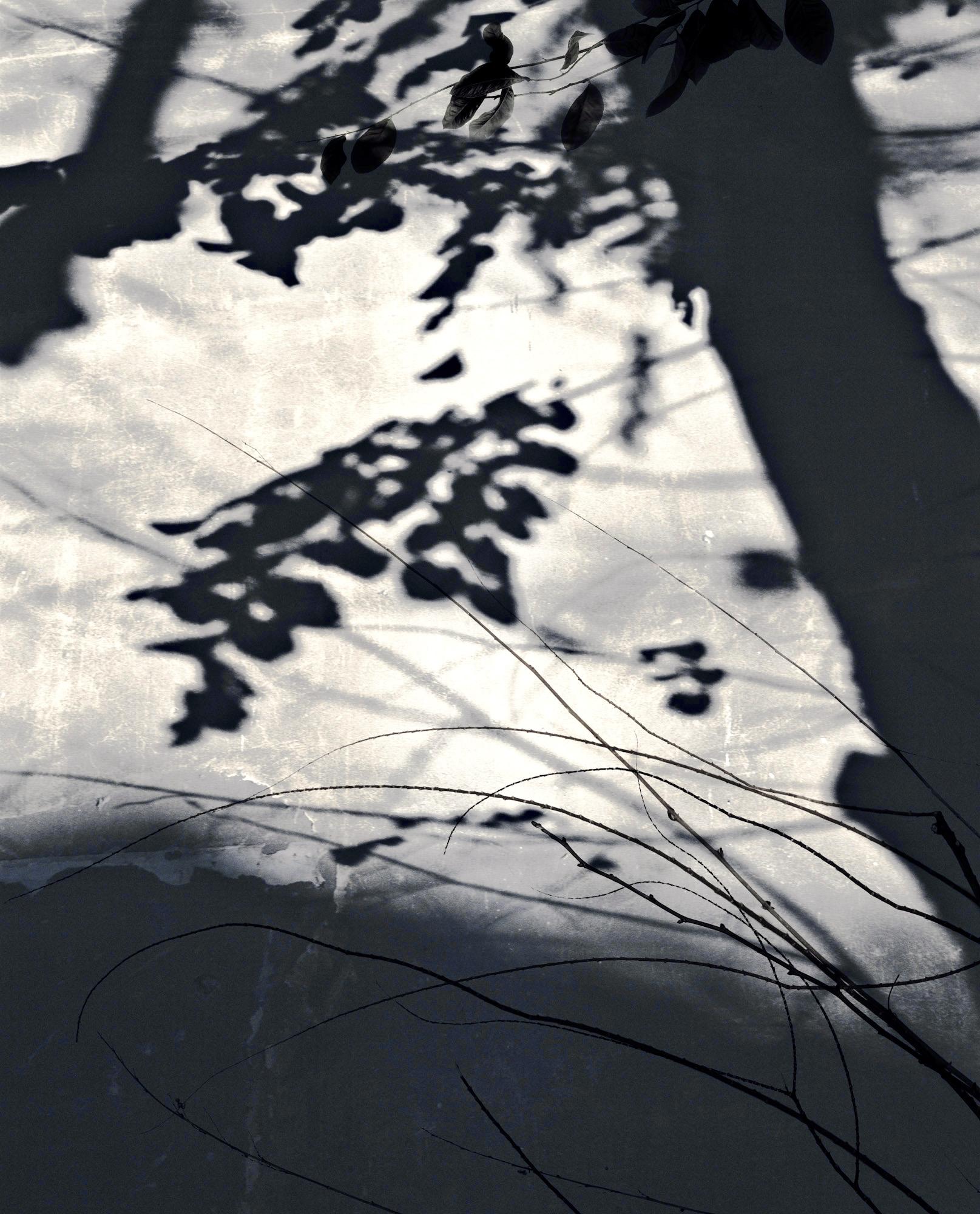 Ombres de jour, ombres de nuit 2014-2015